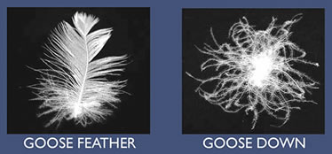 goose feather goose down